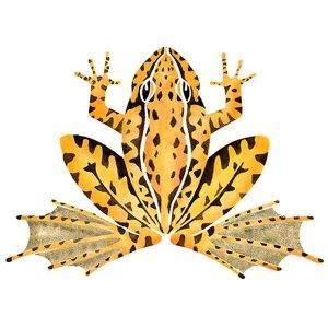 frog davidhallartist.info