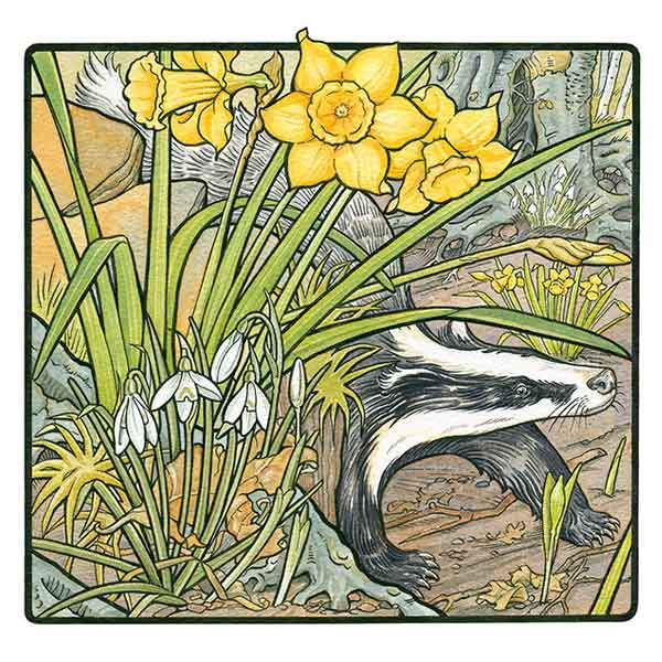 Daffodils & Snowdrops with Badger davidhallartist.info