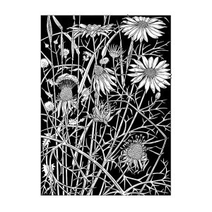 Sea Mayweed black & white Art davidhallartist.info