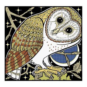 Barn Owl 2 davidhallartist.info