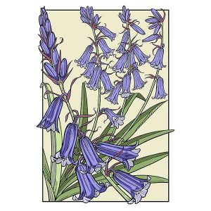 Bluebell in bloom davidhallartist.info