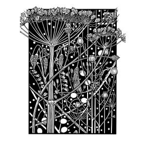 Hogweed black & white Art davidhallartist.info