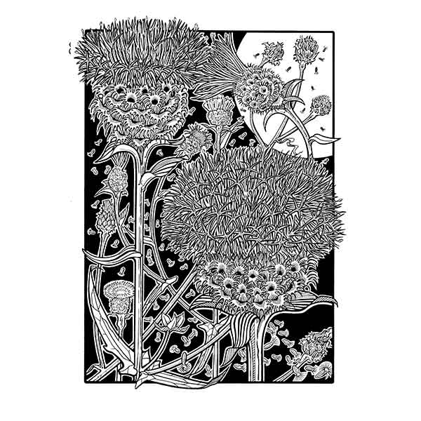 David Hall Artist Knapweed black & white art davidhallartist.info