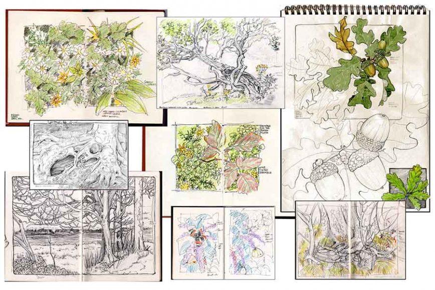 sketchbook davidhallartist.info